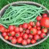 Paradicsomos zöldbab télire